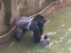 Ricky Gervais has added his voice to those speaking out about the shooting of a silverback gorilla in a US zoo after a four-year-old boy fell into ...