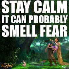 Laugh of the day! One of the many funny lines/scenes in Disney's Tangled with Flynn and Rapunzel