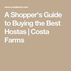 A Shopper's Guide to Buying the Best Hostas   Costa Farms