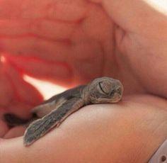 手のひらで眠るカメの赤ちゃん