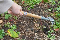 Here you can see the Burgon & Ball Short Handled Weed Slice in action! This shortened version of the full size Weed Slice is very useful for weeding containers, raised beds or closely planted areas of garden.