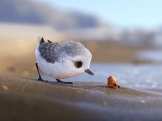 This Oscar-Nominated Short About a Baby Sandpiper Captures the Magic of the Beach from a Whole New Perspective Tier fotos Funny Birds, Cute Birds, Pretty Birds, Beautiful Birds, Animals Beautiful, Cute Baby Animals, Animals And Pets, Funny Animals, Exotic Birds