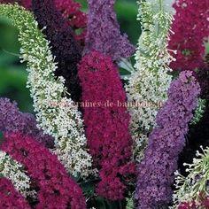 Arbre aux Papillons couleur mélange réf.473