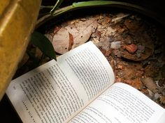 📚 Book Musings: Lost Memento