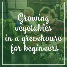 Whether you have toyed with the idea or you're ready to jump in and start, we've put together a basic guide for growing vegetables in a greenhouse for beginners. Check out our blog for tips and tricks!  https://norfolk-greenhouses.co.uk/blog/growing-vegetables-in-a-greenhouse-for-beginners/