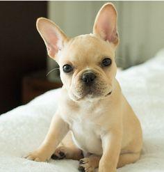 www.naturaldogcompany.com