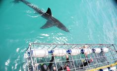 Absolutely #1 on my list: Cage diving with the Great White Sharks in Cape Town.