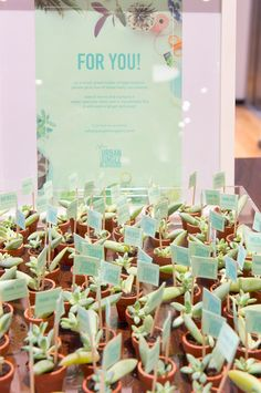 baby succulents at Urban Jungle Bloggers styling event