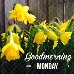 Goodmorning is here. - Oh la Lau Good Night I Love You, Good Morning Good Night, Day For Night, Good Morning Quotes, Monday Greetings, Good Morning Greetings, Happy Monday Quotes, Days Of Week, Good Morning Flowers