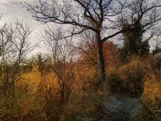 https://flic.kr/p/duvqme | Path of frost