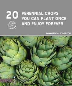 A Guide to 20 Perennial Crops You Can Plant Once and Enjoy Forever! Imagine a garden that once estab