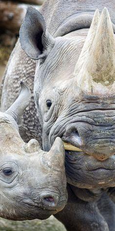 Rhinos... ❤