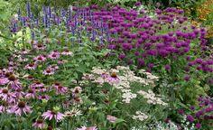 Bewegt man sich bei der Gestaltung in einem zusammenhängenden Farbspektrum wie hier im Blau-Violett, erzielt man eine harmonische Farbkombination. Im Vordergrund sind rosafarbener Sonnenhut und lachsfarbene Schafgarbe verwendet worden, im Hintergrund wachsen violette Indianernessel und blaue Duftnessel