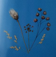 Bog Cotton and Wild Grass Wild Grass, Wild Flowers, Tatoos, Irish, Flag, Nature, Cotton, Art, Art Background