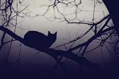 Items similar to Bewitched cm) Fine Art Print - Dark Cat Silhouette - Enchanted Wood - Bare Tree Full Moon Night - Glicée print - Mist on Etsy Black Cat Aesthetic, Aesthetic Art, Spooky Pictures, Cat Perch, Shadow Photography, Dark Images, Image Cat, Cat Silhouette, Beautiful Cats