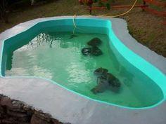 Cómo hacer un estanque | Muy sencillo