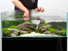 A thoroughly modern aquascape - Practical Fishkeeping Saltwater Aquarium, Planted Aquarium, Freshwater Aquarium, Aquarium Fish, Saltwater Tank, Home Aquarium, Aquarium Design, Water Pond, Water Garden