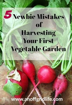 Did you make any of these harvesting mistakes on your first garden? Check out these easy to avoid tips and tricks to maximize your garden harvest! 5 Newbie Mistakes of Harvesting Your First Vegetable Garden Winter Vegetables, Growing Vegetables, Growing Plants, Vegetable Garden Planner, Vegetable Gardening, Kitchen Gardening, Types Of Herbs, Organic Gardening Tips, Gardening Blogs