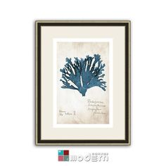 Seaweed by William Henry Harvey giclee on archival by ModernCanvas