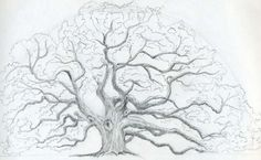 Rose Drawings In Pencil   How to draw a tree with no leaves pictures 3