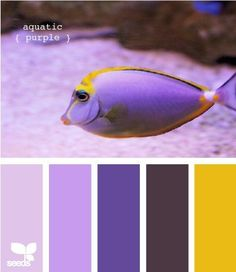 Who knew a fish could inspire a colour palette?