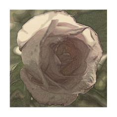Pink rose wood canvas