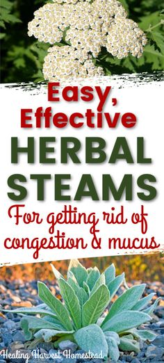 How to Get Rid of Sticky, Gooey Mucus with an Herbal Steam (Plus Best Herbs and Essential Oils to Help) — Home Healing Harvest Homestead Natural Cures, Natural Healing, Getting Rid Of Mucus, How To Clear Sinuses, Oils For Sinus, Best Herbal Tea, Medicinal Plants, Herbal Medicine, Lungs