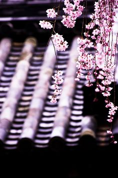 sakura #japan #nara  lσvє ♥ #bluedivagal, bluedivadesigns.wordpress.com