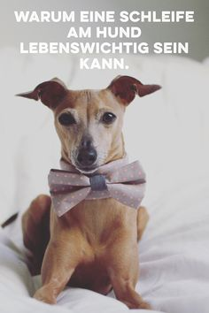Warum eine Schleife am Hund lebenswichtig sein kann.