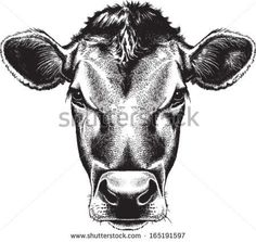 Image result for cow head proportions