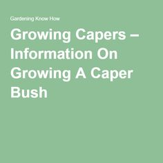 Growing Capers – Information On Growing A Caper Bush
