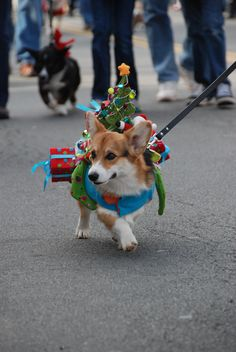 Christmas in Middleburg Parade. Saturday, December 1st, 2012. Warning: Includes cute pets dressed up for the holidays!! Adorable!