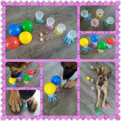 Spel 43 (hondenspel hond spel denkwerk hersenwerk brain dog game play diy) www.facebook.com/denkspellenvoorjehond