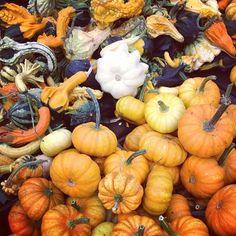 #farmersmarketnyc - Union Square Greenmarket