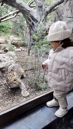 Big cat attacks toddler in Zoo
