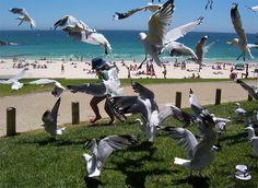 Perth Beach, Perth's Best Beaches Sorrento Beach, Scarborough Beach, Cottesloe Beach, Beach Accommodation, Beach Video, Australian Beach, Perth Western Australia, Nude Beach, City Beach