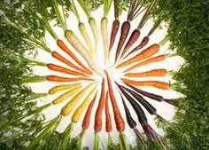 Many different colored carrots that are available to grow, from the article Growing Colourful Carrots by growveg.com