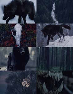 "aloofaesthetique:  ""Black Wolf Aesthetic, for Anon  """