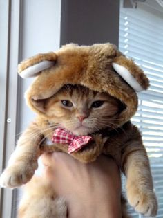 J'aime les chats roux.