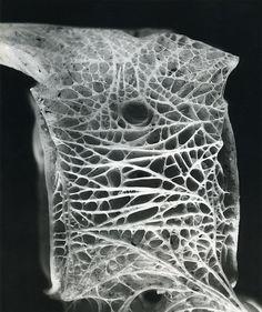 Andreas Feininger, 1986