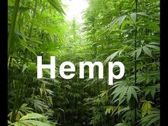 What Is Hemp | What Is Hemp Oil Benefits  First Ever Cannabis (Industrial Hemp) Based Network Marketing Opportunity Available in All 50 States!  ** Here is how to get registered **  1. Go to http://thebuzzlaunch.com/  2. Watch the video overviews  3. Watch the compliance videos  4. Click on the BLUE JOIN BUTTON  5. Enter my sponsor ID: ( 4612988 )  #Kway #HempGang #CBD