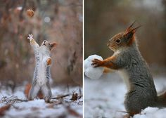 Russian Photographer Captures The Cutest Squirrel Photo Session EverPhotos by ©Vadim Trunov -Via Bored Panda