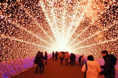 #bucketlistmap.com #travel #bucketlist #NabanaNoSato #Japan #Christmaslights