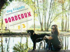 Vous vivezà Bordeaux avec votre chien? Ou vous faites partie de ces nouveaux voyageurs qui, comme moi, embarquent leur compagnon partout avec eux? Vous...