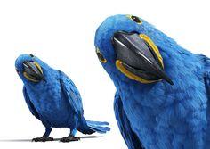 3D Macaws by D'Avila Studio, via Behance