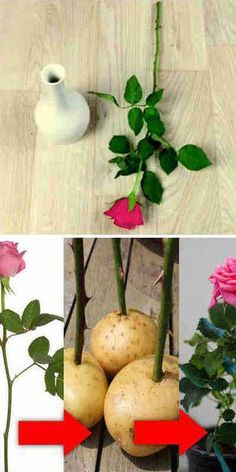 7 Simple and Creative Tricks: Corner Garden Ideas Projects big garden ideas tips.Container Garden Ideas Tips And Tricks backyard garden patio Accomplished Clever Tips: Backyard Garden Party Plants rustic backyard garden diy projects. Backyard Garden Landscape, Small Backyard Gardens, Garden Landscaping, Garden Privacy, Privacy Fences, Garden Pond, Garden Planters, Roses In Potatoes, Rose Cuttings