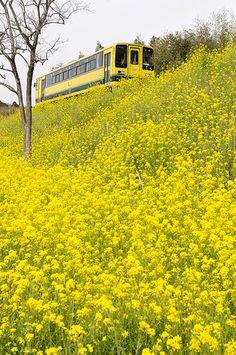 Isumi Line in Chiba, Japan.