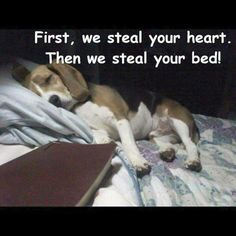 First, we steal your heart. Then we steal your bed!