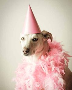 Party Girl, by Joy St.Claire  #pink #feather #boa #party #vintage  #dog #puppy #retro