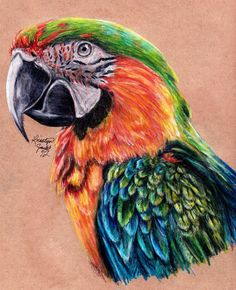 color pencil drawing ideas Redraw of Prismacolor pencils on recycled paper. About 3 hours with some breaks in between. Cool Art Drawings, Bird Drawings, Realistic Drawings, Colorful Drawings, Animal Drawings, Horse Drawings, Drawing Art, Drawing Ideas, Drawing Birds
